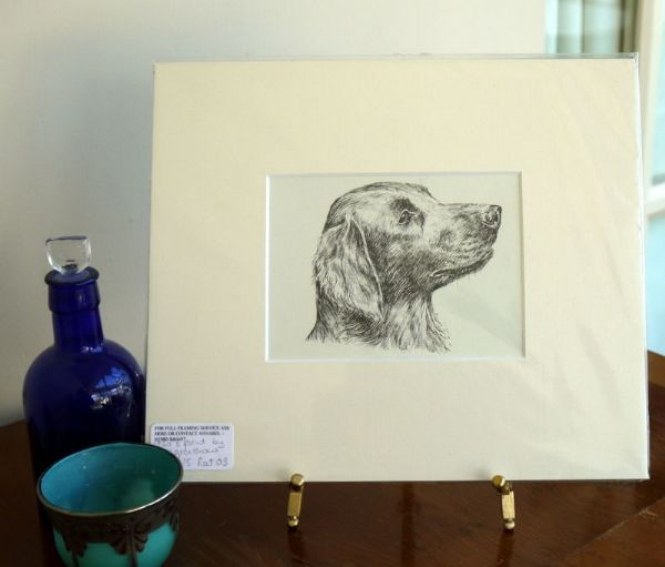 Flat Coated Retriever - head - Ret O3 - 1960's print by Bridget Olerenshaw